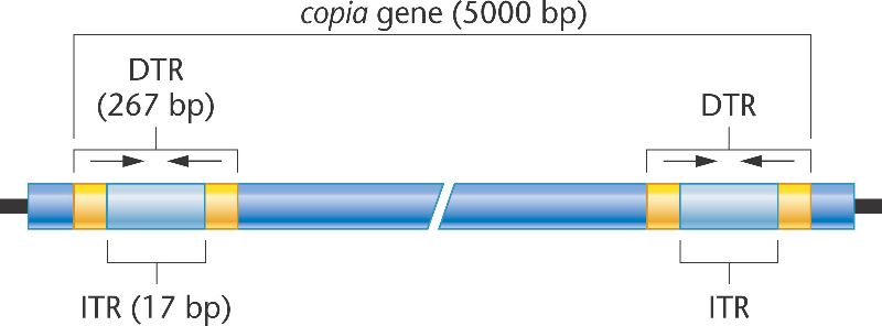 Chapter 15 Gene Mutation, DNA Repair, and Transposition